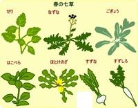 春の七草.jpg